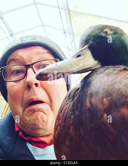 Killer duck - Stock-Bilder