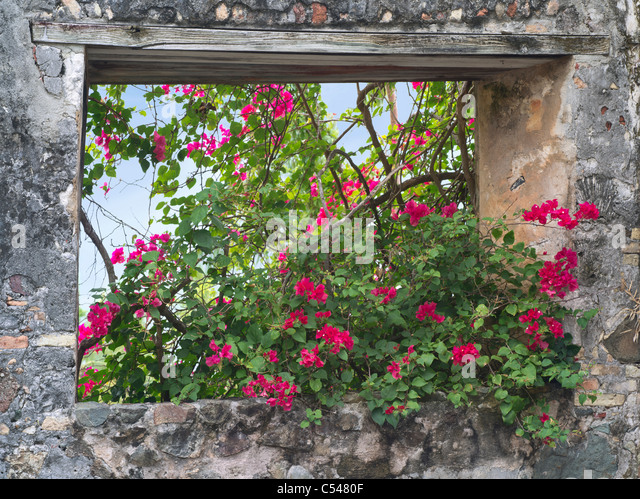 Stone window with bouganvilla flowers. St. John, Virgin Islands. - Stock Image