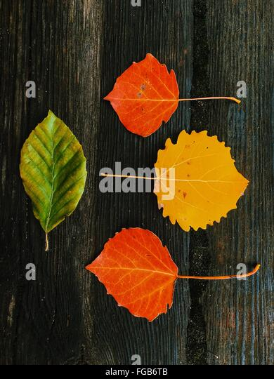 High Angle View Of Autumn Leaves On Table - Stock Image