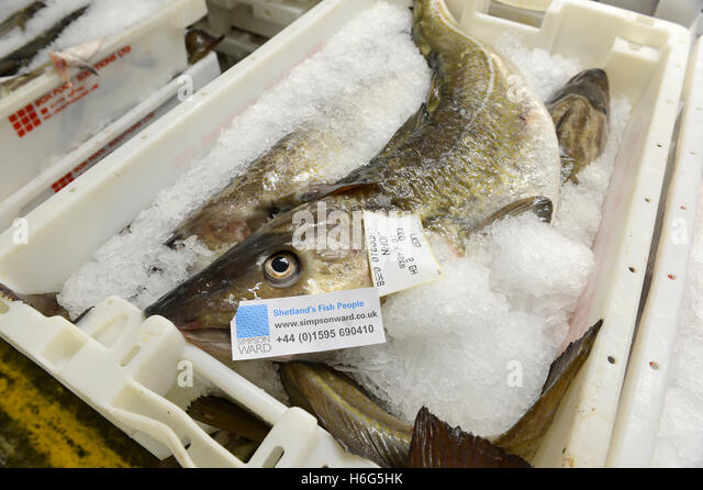 Fishing boat catch boxed iced stock photos fishing boat for 99 5 the fish