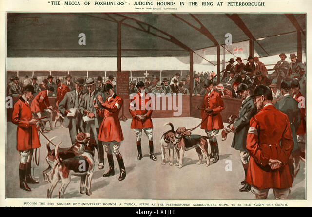 1920s UK Foxhounds Shows Magazine Plate - Stock Image
