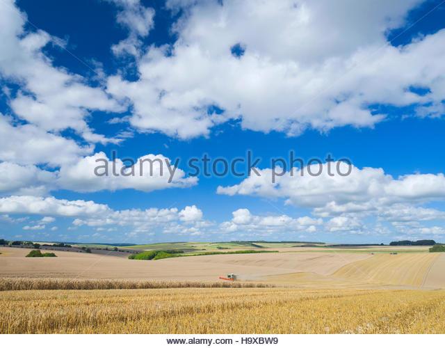 Combine Harvester Harvesting Field Of Wheat - Stock Image