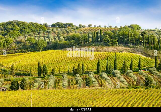 Wineyard, Tuscany Italy - Stock Image