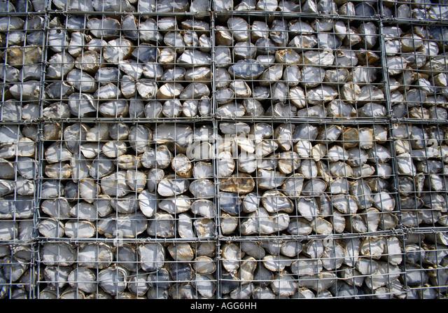 Coastal Defences - Gabions Stacked Up - Stock-Bilder