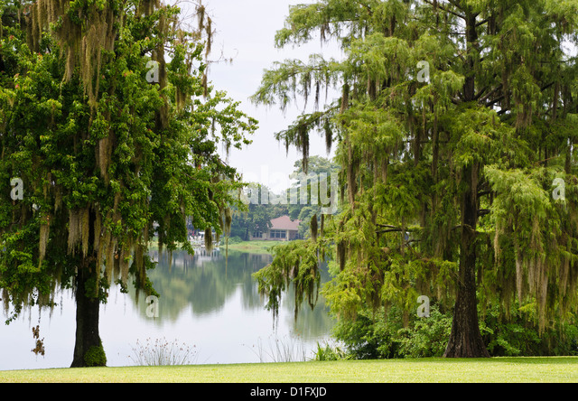 Spanish moss, Orlando, Florida, United States of America, North America - Stock Image