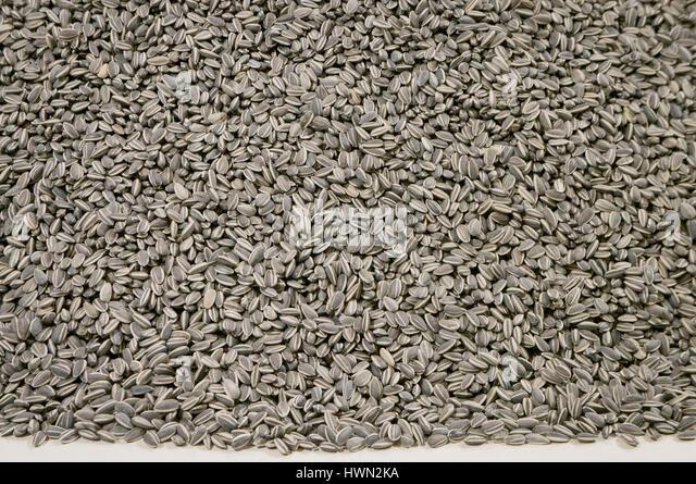 Veletrzni palace, National Gallery (NG), Ai Weiwei, The Sunflower seeds - Stock-Bilder