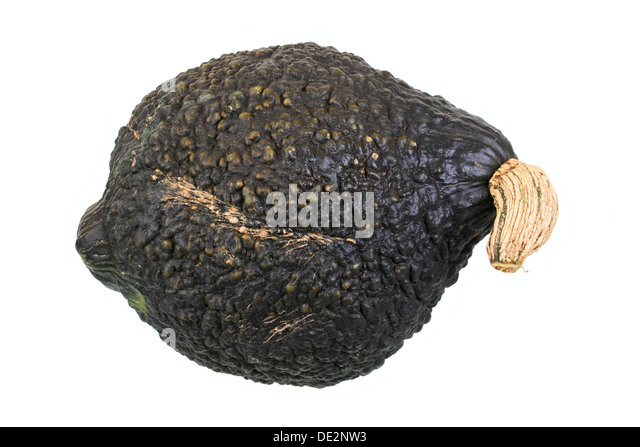 Squash variety, Chicago Warted Hubbard - Stock Image