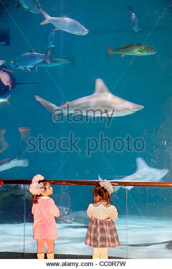 New Orleans Louisiana Woldenberg Riverfront Park Audubon Aquarium of the Americas research conservation aquatic - Stock Image