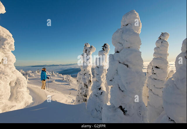 A skier among snow ghosts chooses his route in a beautiful environment sunrise top Sun Peaks Resort Thompson Okangan - Stock Image