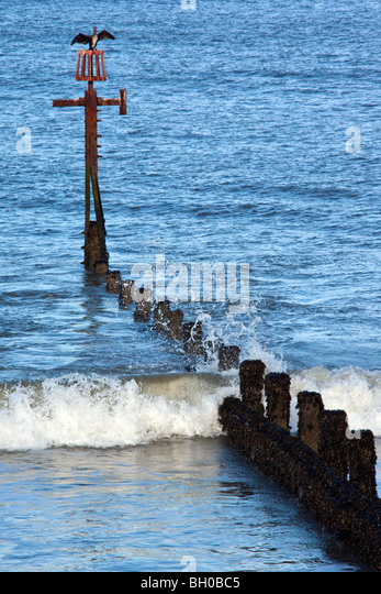 A Cormorant (phalacrocorax carbo) drying it's wings on a breakwater on the Norfolk coast in South East England - Stock Image