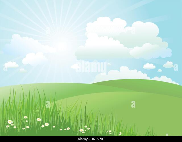 Summer landscape with daisies in grass - Stock Image