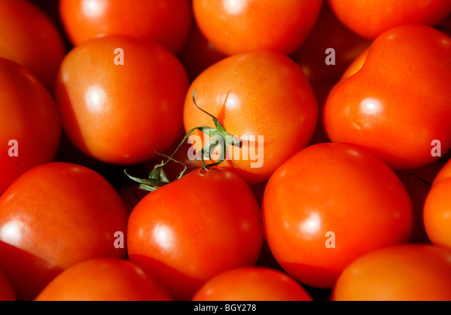 A tray of tomatoes in a supermarket. - Stock Image
