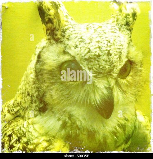 A close up of a stuffed face of a owl - Stock-Bilder