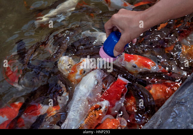 Animal feeding bottle stock photos animal feeding bottle for Koi fish farm near me
