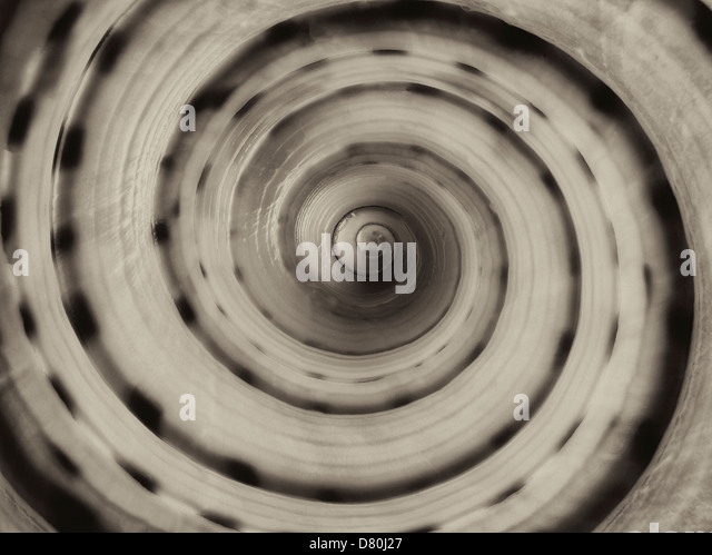 Extreme Close up of Large Spotted Tun seashell - Stock Image