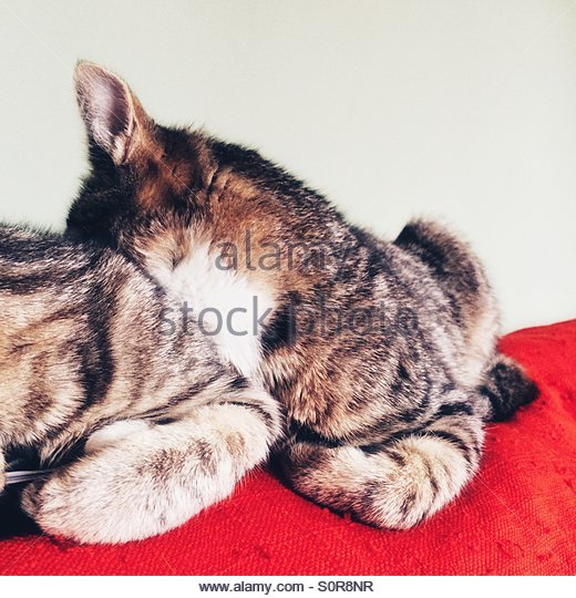 Two Cats Sleeping Side by Side - Stock Image