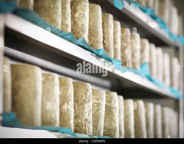 Blue cheese on shelves in factory - Stock Image
