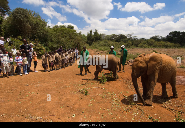 David Sheldrick Wildlife Trust, Elephant Orphanage, Nairobi, Kenya, East Africa, Africa - Stock Image