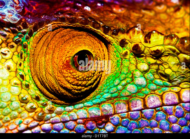 Photo of colorful reptilian eye, closeup head part of chameleon, multicolor scaly skin of lizard, african animal - Stock-Bilder