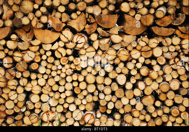 Various logs are stacked up the firewood. There are beams of different size and different sort. - Stock Image