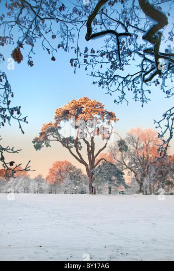 Barnett Demesne woodlands, near Malone House. - Stock Image