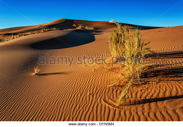 The beauty of the desert is in it's simplicity and here the shot is made attractive because of the great lighting. - Stock Image