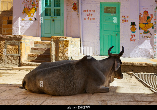 Street scene, cow on the street, Jaisalmer, Rajasthan State, India - Stock Image