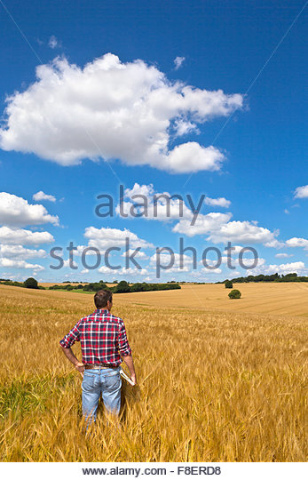 Farmer looking out over sunny rural barley crop field in summer - Stock Image