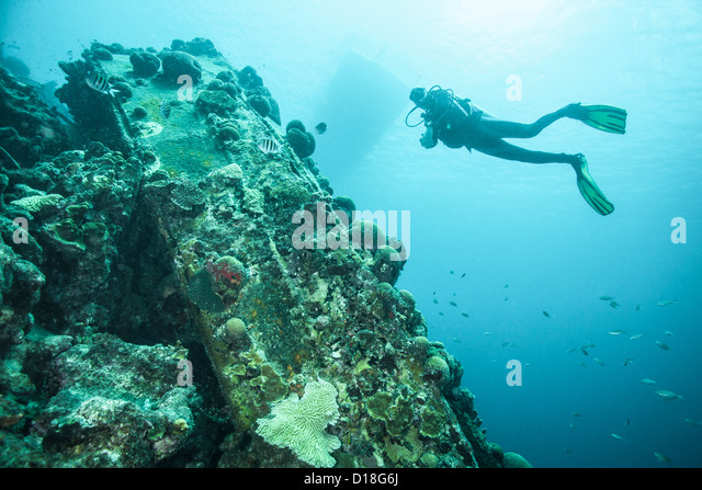 Diver examining underwater reef - Stock Image