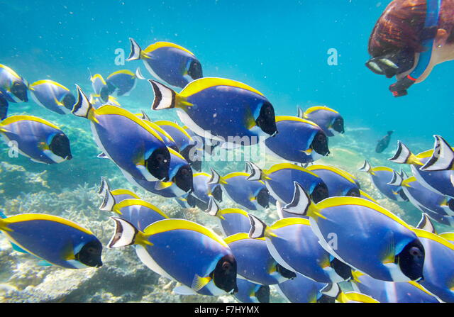 Tropical underwater scenery at Maldives Island, Indian Ocean - Stock Image