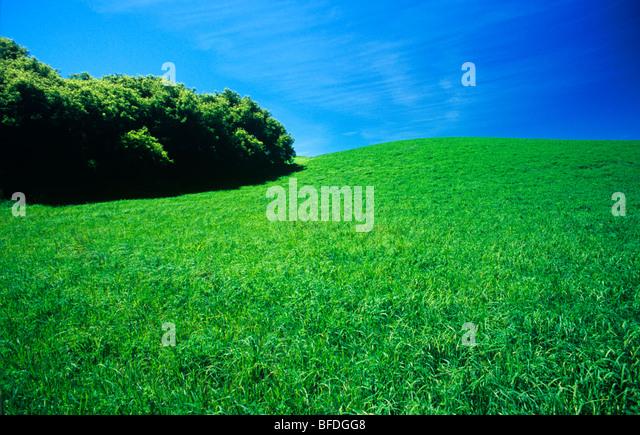 Green hay field, Tiger Hills, Manitoba, Canada - Stock Image