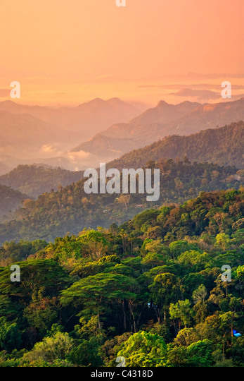 Tea Plantations, Munnar, Western Ghats, Kerala, South India - Stock-Bilder