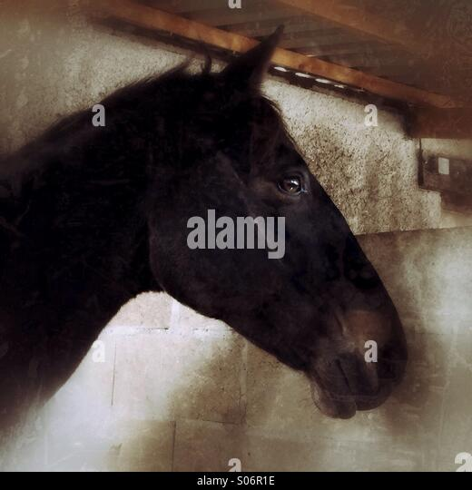 Horse in stable - Stock Image