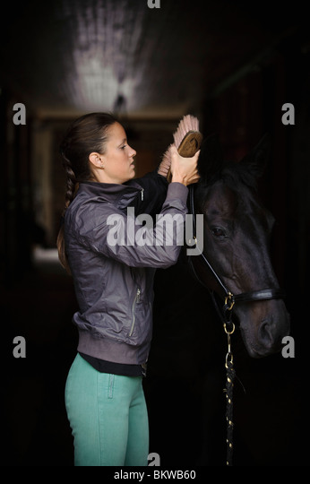 Woman taking care of horse - Stock Image