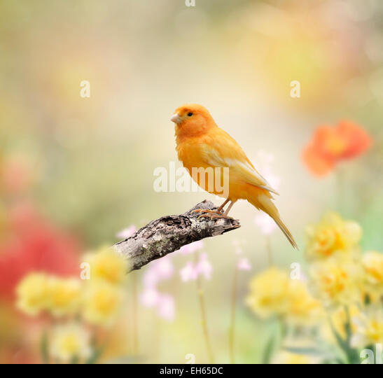 Yellow Bird Perched In The Garden - Stock Image
