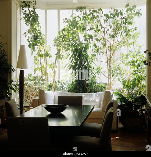 Sunroom Stock Photos amp Sunroom Stock Images Alamy : dining room and plants in front of window jm3257 from www.alamy.com size 520 x 540 jpeg 72kB