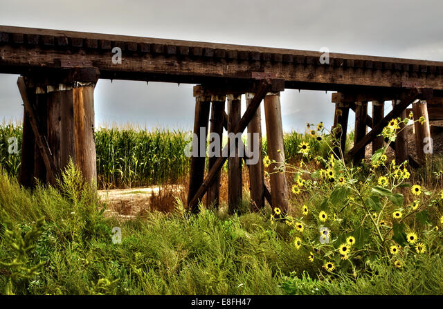 Rural train trestle surrounded by corn and wild flowers - Stock-Bilder