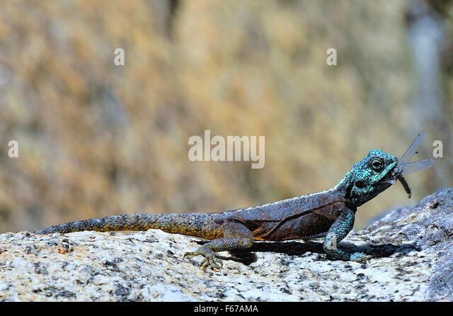 Dragons - Stock Image