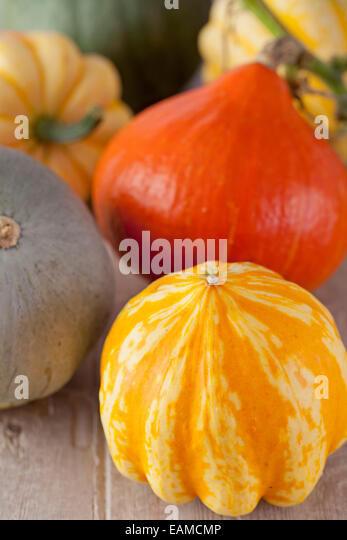 Pumpkins & Squashes - Stock Image
