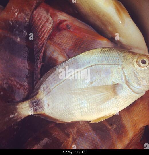 Fish on market close up - Stock Image