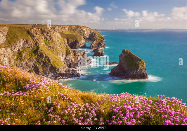 Pink thrift flowers, Bedruthan Steps, Newquay, Cornwall, England, United Kingdom, Europe - Stock Image