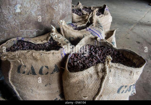 Bags full of cocoa beans, Cocoa plantation Roca Aguaize, East coast of Sao Tome, Sao Tome and Principe, Atlantic - Stock Image