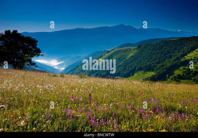 Wildflowers at dawn along the Forca Canapine in the Monti Sibillini National Park, Umbria Italy - Stock-Bilder