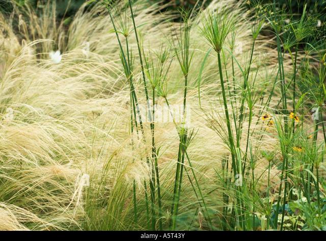 Ornamental grasses stock photos ornamental grasses stock for Different ornamental grasses