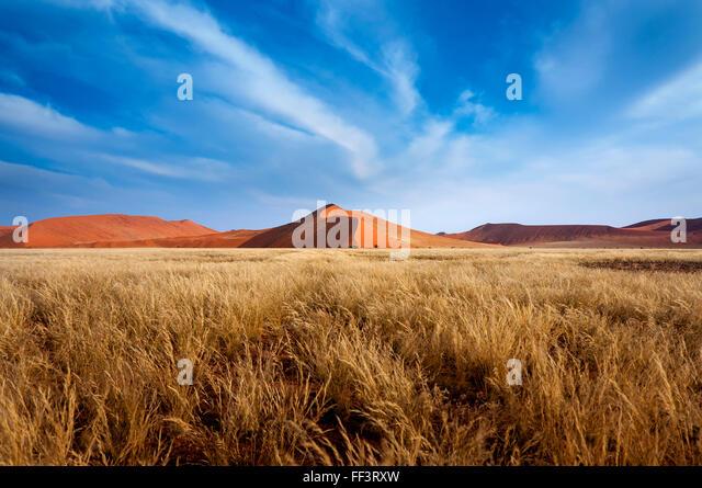 Red Dunes in Sossusvlei, in the Namib Desert, Namibia - Stock Image