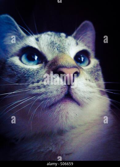 Blue eyes - Stock Image