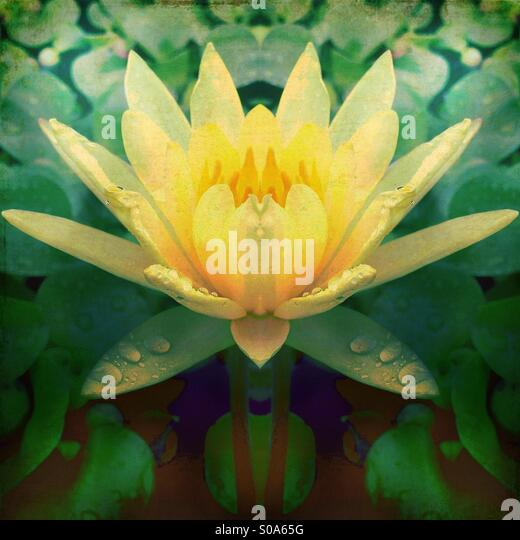 Yellow Flower with Lily Pads - Stock Image