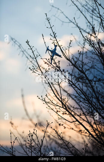 A quadcopter or drone stuck in a tree after a crash - Stock Image