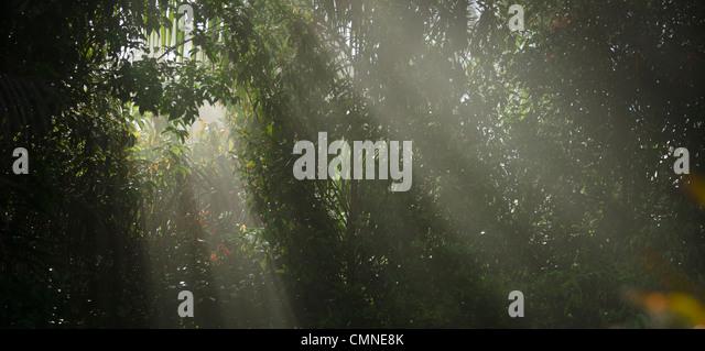 Shafts of sunlight pierce a veil of foliage. Lowland Dipterocarp rainforest, Maliau Basin - Sabah's 'Lost - Stock Image