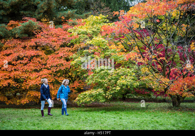 Westonbirt Arboretum, South Gloucestershire, UK. 19th October, 2016. 19th October 2016. A stunning display of leaf - Stock Image